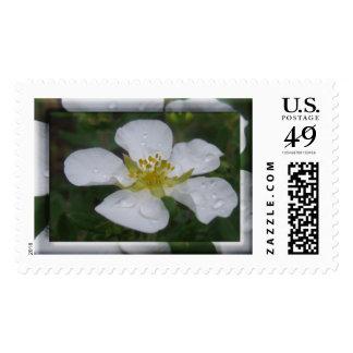 Sellos de U.S.Postage - flores del Potentilla