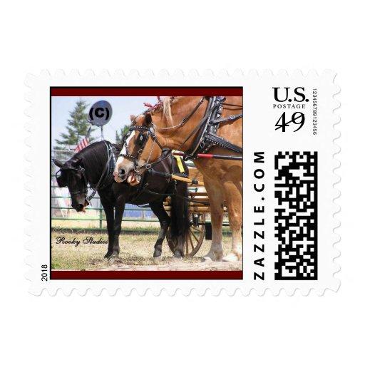 Sellos de USPS de la charla del caballo