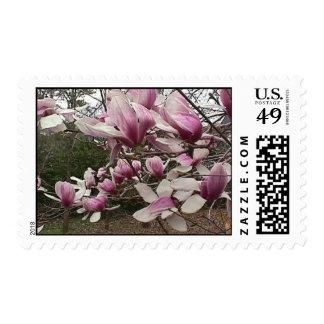 Sellos del árbol de tulipán