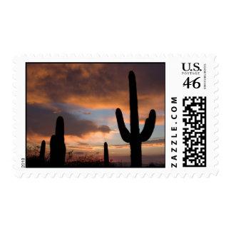 Sellos del cactus del desierto del Saguaro