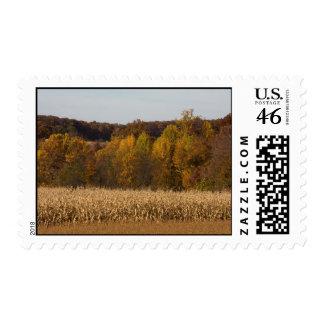 Sellos del campo de maíz del otoño