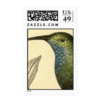 Sellos del colibrí del vintage
