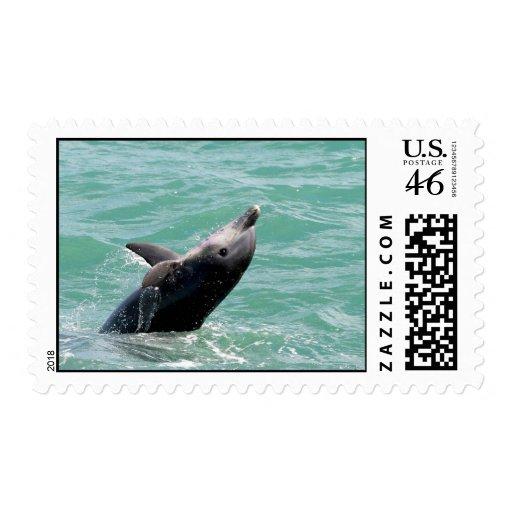 Sellos del delfín