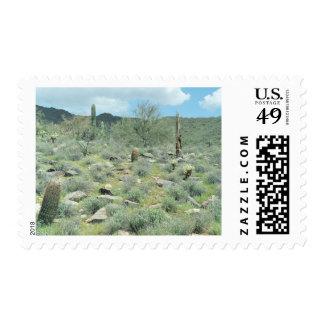 Sellos del desierto de Sonoran de las progresiones