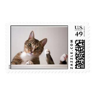 Sellos del gatito para la persona cariñosa del gat