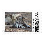 Sellos del lobo gris de los lobos
