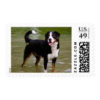 Sellos del perrito del perro de montaña de Bernese