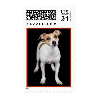 Sellos del perro de perrito de Jack Russell