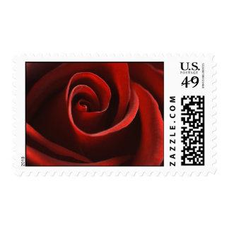 Sellos del rosa rojo