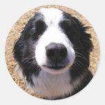 Sellos del sobre de la nariz de perro etiquetas