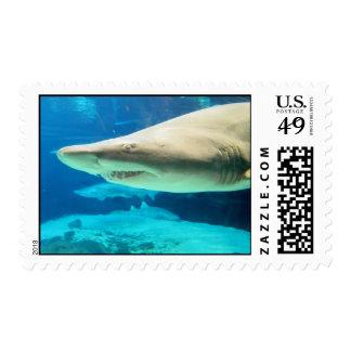 Sellos del tiburón