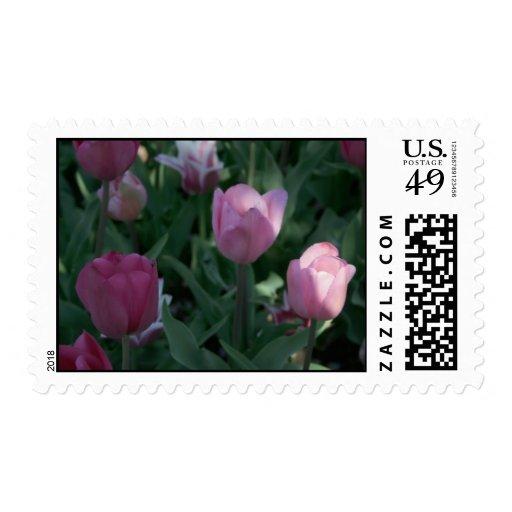 Sellos del tulipán
