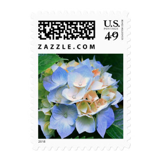 Sellos florales del azul y del melocotón/del Hydra