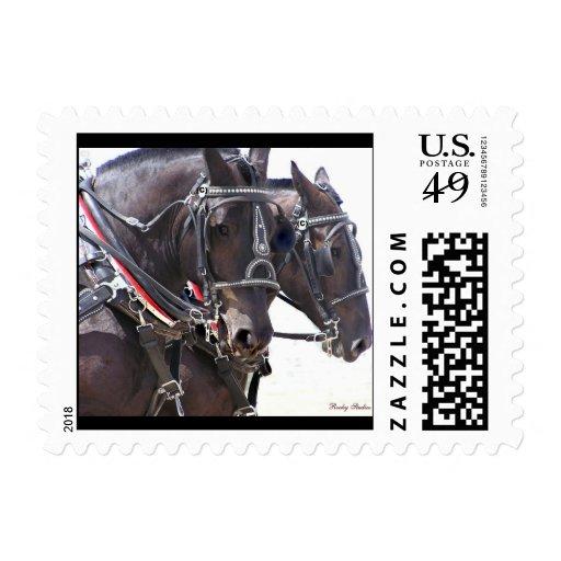 Sellos grandes de USPS de los caballos