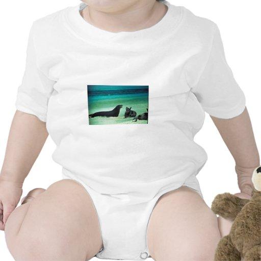 Sellos hawaianos del monje camiseta