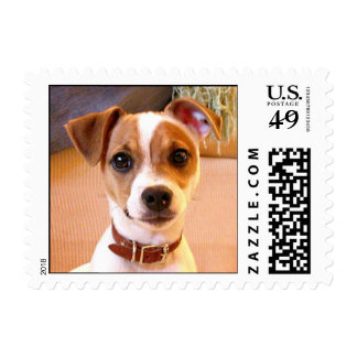 Sellos lindos del perrito de Jack Russell Terrier