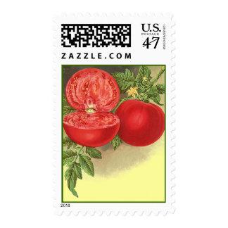 Sellos maduros de los tomates de la herencia del