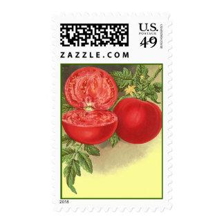 Sellos maduros de los tomates de la herencia del t