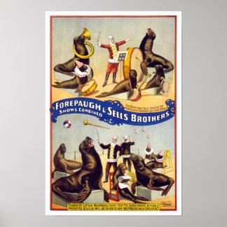 Sellos maravilloso entrenados del circo, 1899. póster