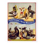 Sellos maravilloso entrenados del circo, 1899 tarjeta postal