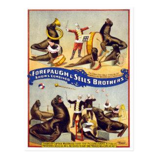 Sellos maravilloso entrenados del circo 1899 tarjeta postal