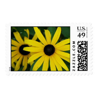 Sellos Negro-Observados de la flor de Susans