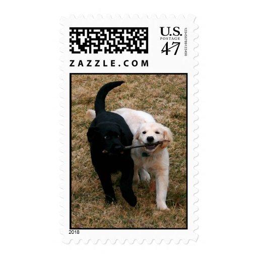 Sellos negros y blancos de los perritos