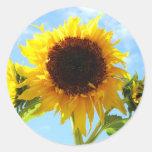 Sellos o pegatinas del sobre de los girasoles etiquetas redondas