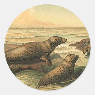 Sellos por el océano, animales salvajes del pegatina redonda