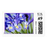 Sellos púrpuras de la flor del iris de la
