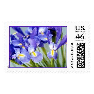 Sellos púrpuras de la flor del iris de la primaver