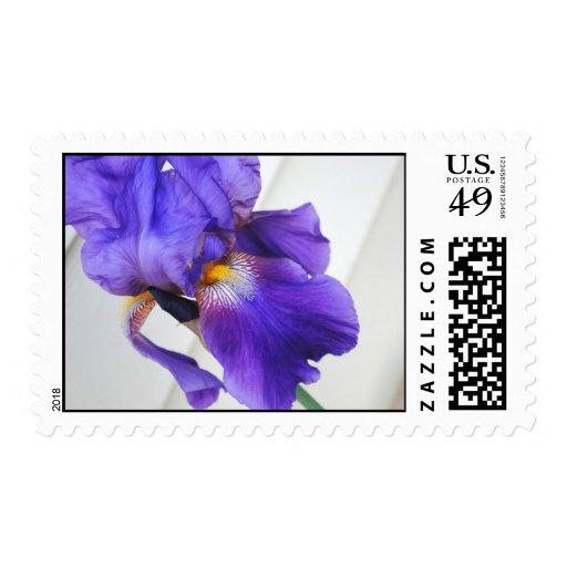 Sellos púrpuras del iris