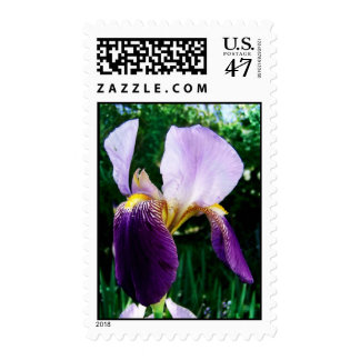 Sellos púrpuras del personalizado del iris