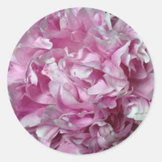 Sellos redondos rizados/pegatinas del Peony rosado Pegatina Redonda