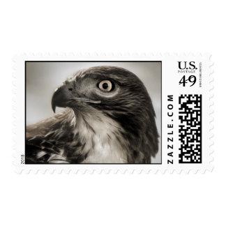 sellos Rojo-atados del halcón