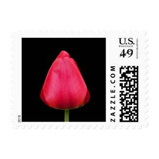 Sellos rojos hermosos de la foto del tulipán