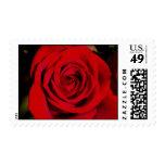 Sellos románticos del rosa rojo
