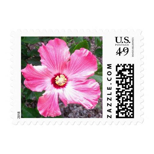 Sellos rosados del hibisco