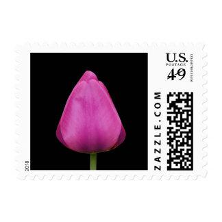 Sellos rosados hermosos de la foto del tulipán