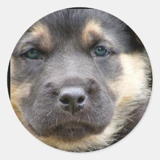 Sellos sabios del sobre del perro pegatina redonda