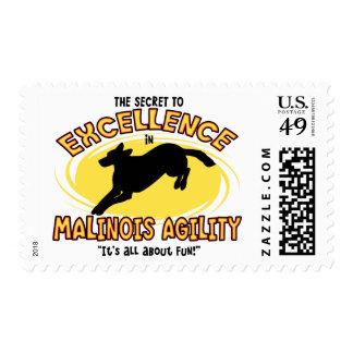 Sellos secretos de Malinois del belga de la