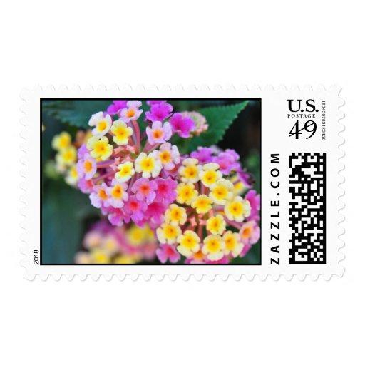 Sellos tropicales de las flores