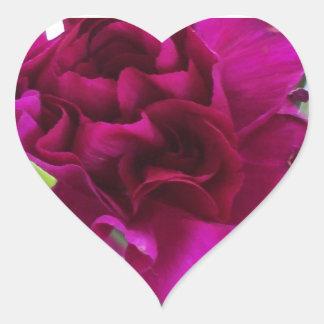 Sellos vibrantes de los claveles del putple pegatina en forma de corazón