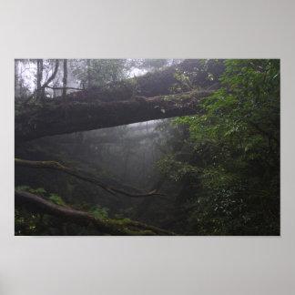 Selva misteriosa impresiones