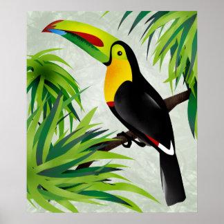 Selva Toucan Posters