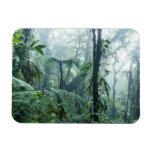 Selva tropical, bosque de la nube de Monteverde, Imán Flexible