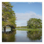 SELVA TROPICAL DE AMAZONIA POSTERS