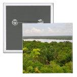 Selva tropical de America Central en Belice Pins