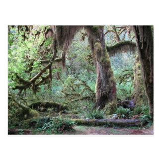 Selva tropical de Hoh - parque nacional olímpico Postal