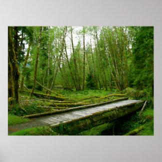 Selva tropical de Hoh - parque nacional olímpico Póster